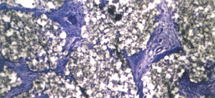 pod-mikroskopem_niebieskie